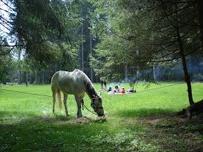 Photo: Le repas de midi sous les sapins / Mittagspause unter den Tannen