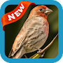 Finch Wallpaper APK icon