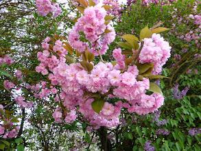 Photo: C'était le printemps
