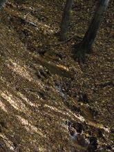"""Photo: Citát z opisu túry na stránke http://hiking.sk/: """"Tesne pred ukazovateľom Staré bane preteká cez cestu potôčik..."""