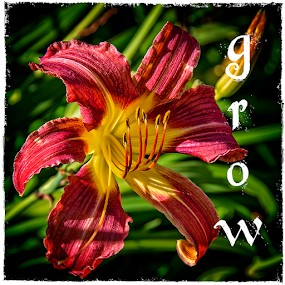 grow by Lennie L. - Typography Words