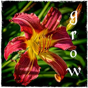 bc lily typog.jpg