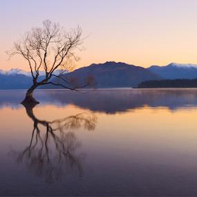 Wanaka Tree at Dawn ... by Anupam Hatui - Landscapes Waterscapes ( wanaka, dawn, tree, south island, waterscape, sunrise, lake wanaka, landscape, new zealand, canonnz, lonely tree,  )