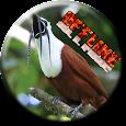 Pássaro Araponga Cantando apk