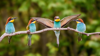 four birds sitting on a branch