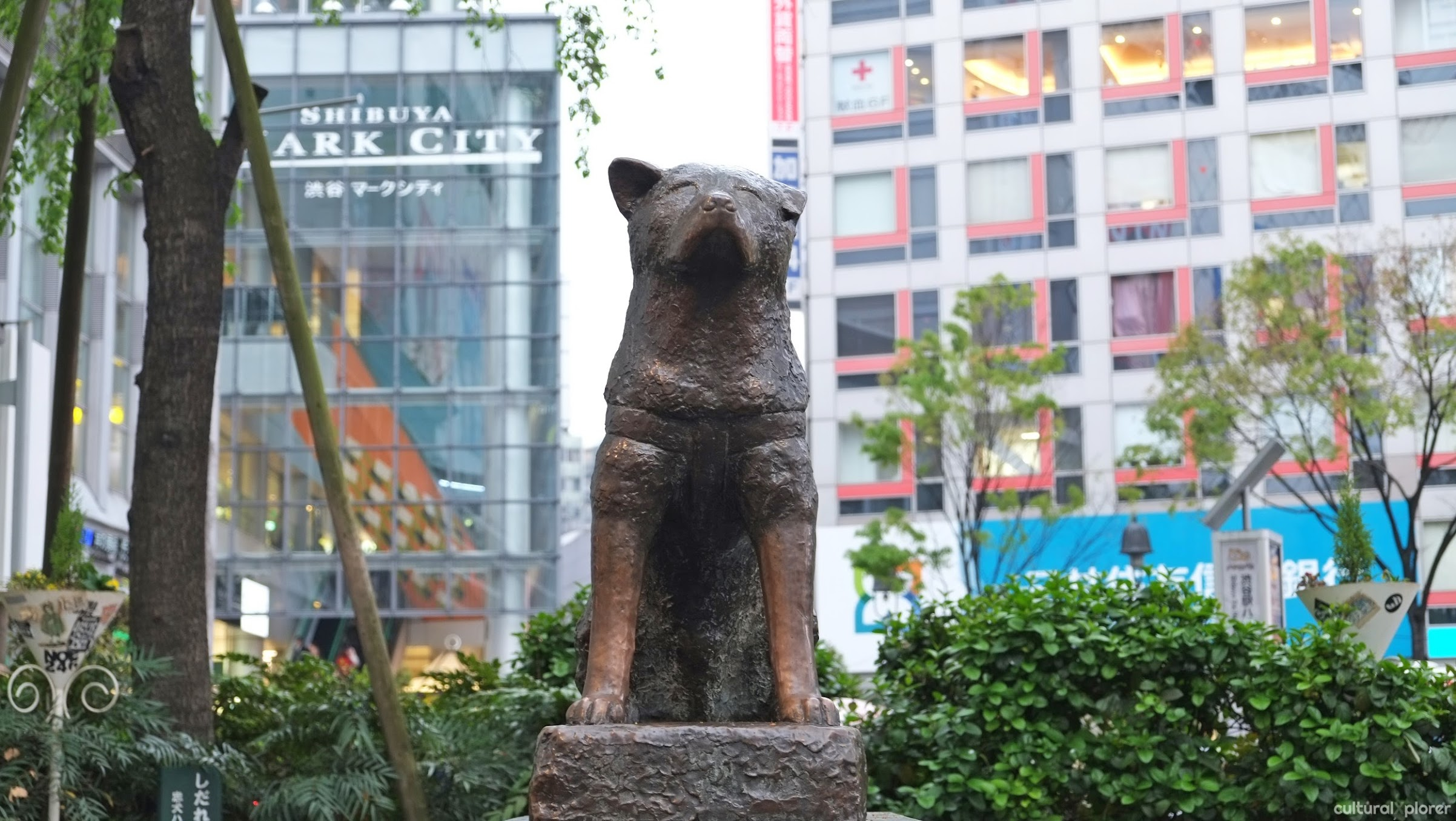 Hachikō, Japan's most loyal dog