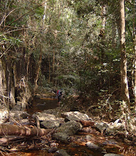 Photo: Hiking on the stream again. We were in headwaters of Lam Ta Klong river