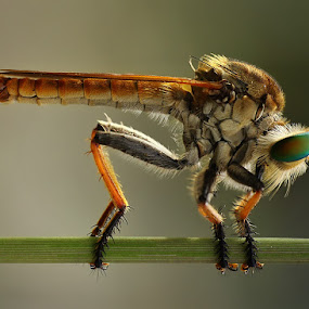standby .,  by Angga Putra - Animals Insects & Spiders