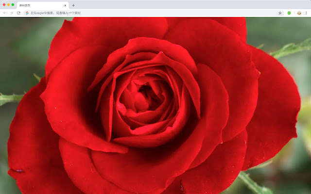 Rose HD Wallpapers New Tab Flowers Themes