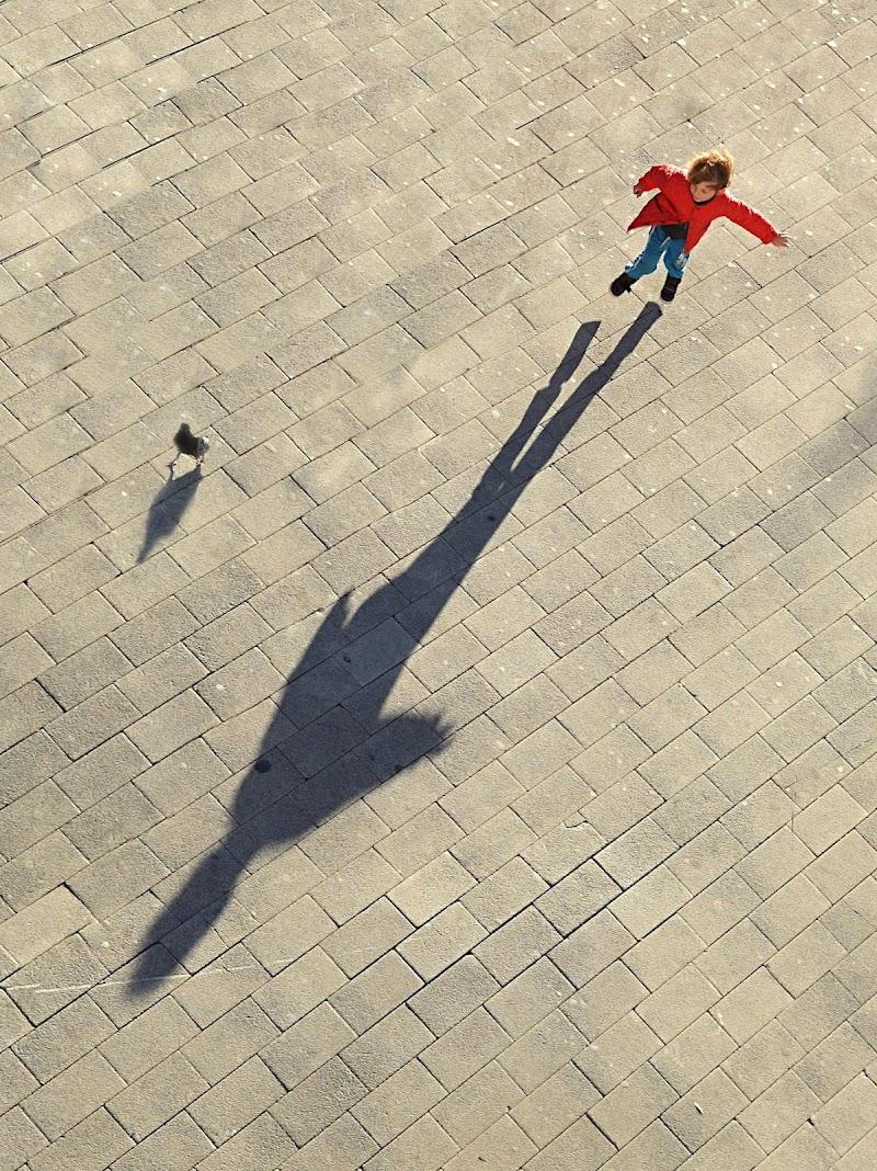 Corri, piccione! di Dariagufo