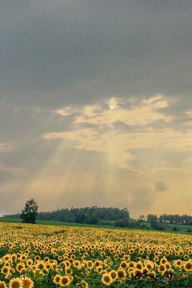 暗雲から差し込める希望の光