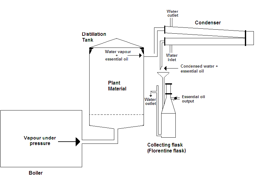 steam distillation for cbd