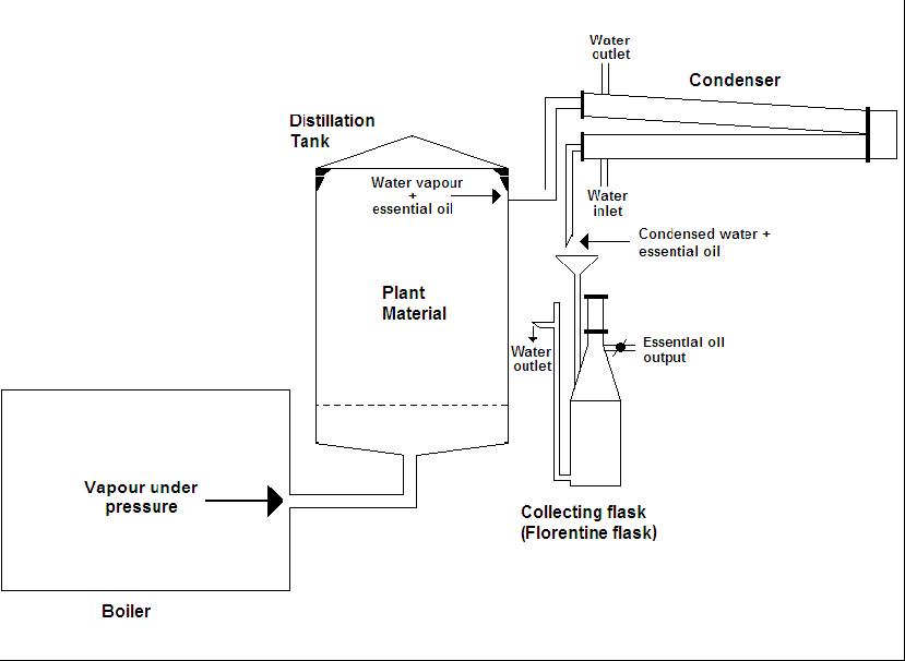 steam distillation for cbd