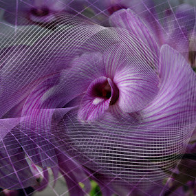 Orchid by Carmen Velcic - Illustration Abstract & Patterns