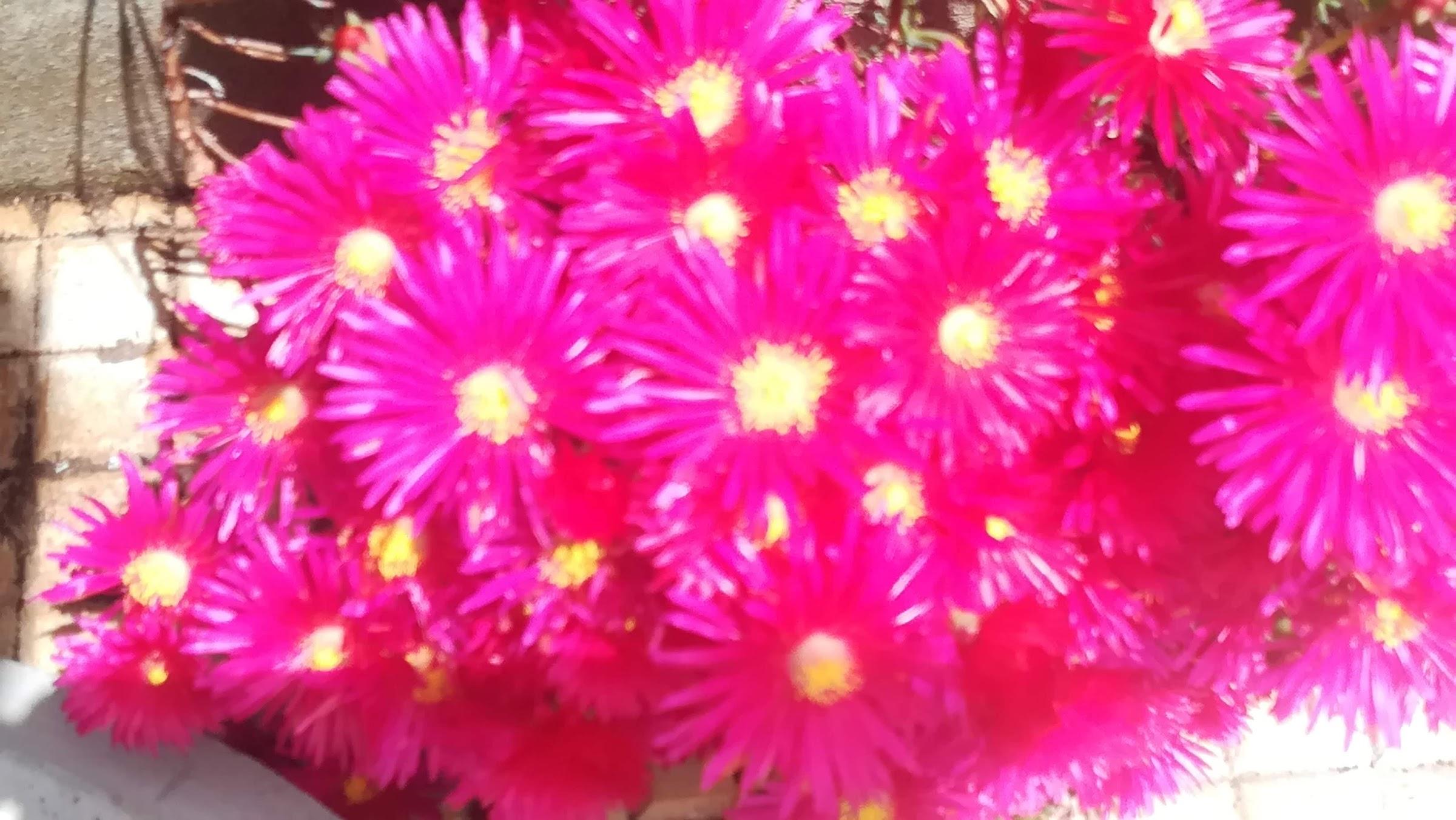 Uitbundige kleuren in de tuin: zo uitbundig dat het zeer doet!