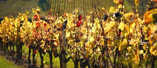 Photo: Vineyards in Beaujolais, near Theize