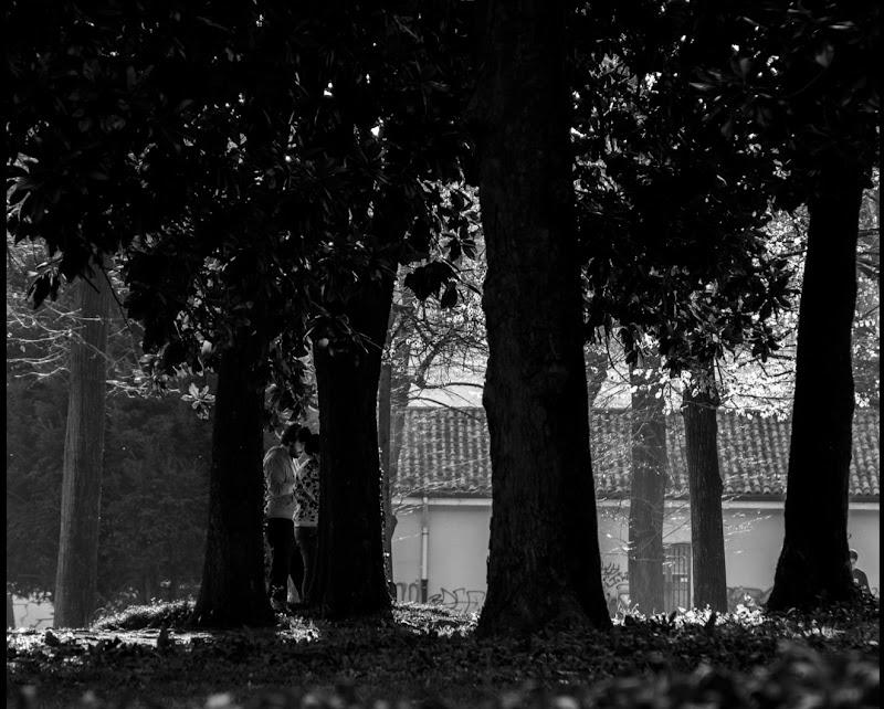 Fra' gli alberi di Otto