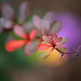 Seasonal Hues by Molly Kat - Nature Up Close Leaves & Grasses ( mirrored reflections, molly kat, macro, autumn, fall, beauty, love of nature, photography, molly mcmahon )