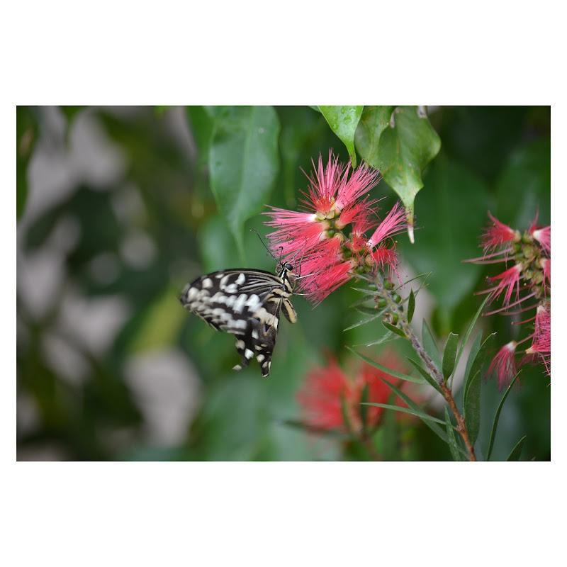 Al tocco di una farfalla di _mariacardali