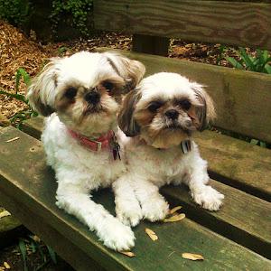 Molly&Mitsy08.jpg