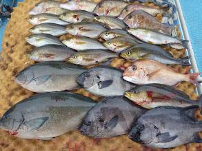 "Photo: こちらは""クマガイさん""の釣果! イサキ、オナガ、イシダイ、 真鯛もキャッチしました!"