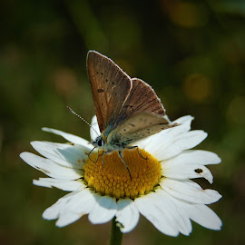by Sara Verdini - Flowers Flowers in the Wild ( butterfly, flower )