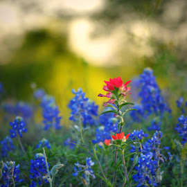 Here comes the Sun by Rhonda Kay - Flowers Flowers in the Wild