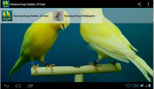Kanarya Kuşu Sesleri Zil Sesi