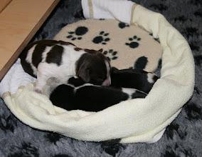 Photo: aber auch dann kuscheln sie gern zusammen (4 Tage alt)