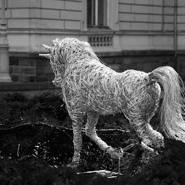 koj by Dušan Gajšek - Black & White Abstract