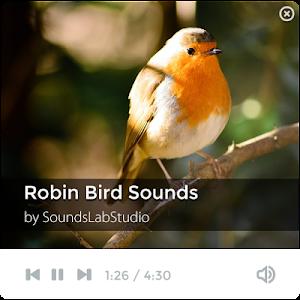 Robin Bird Sounds screenshot 0