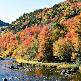 Adirondack Stream by Andy Bigelow - Landscapes Mountains & Hills ( #stream, #autumn, #nature, #mountains, #fall )