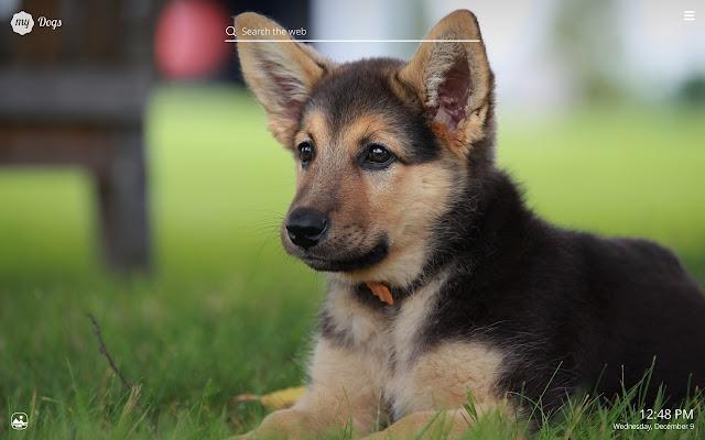 My Dogs Hd Wallpaper Cute Dog Puppy New Tab