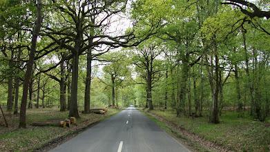 Photo: Route forestière (forêt de Rambouillet)