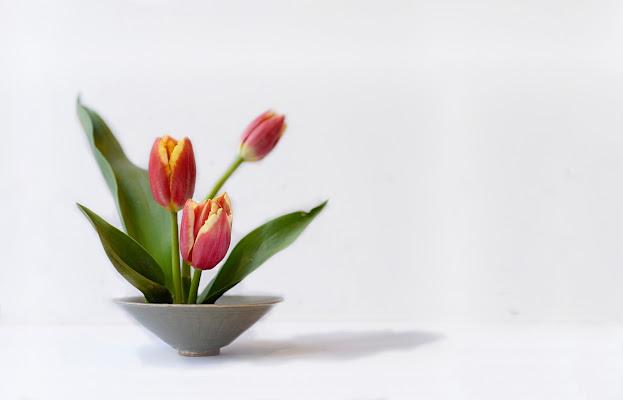 Tre tulipani di Dariagufo