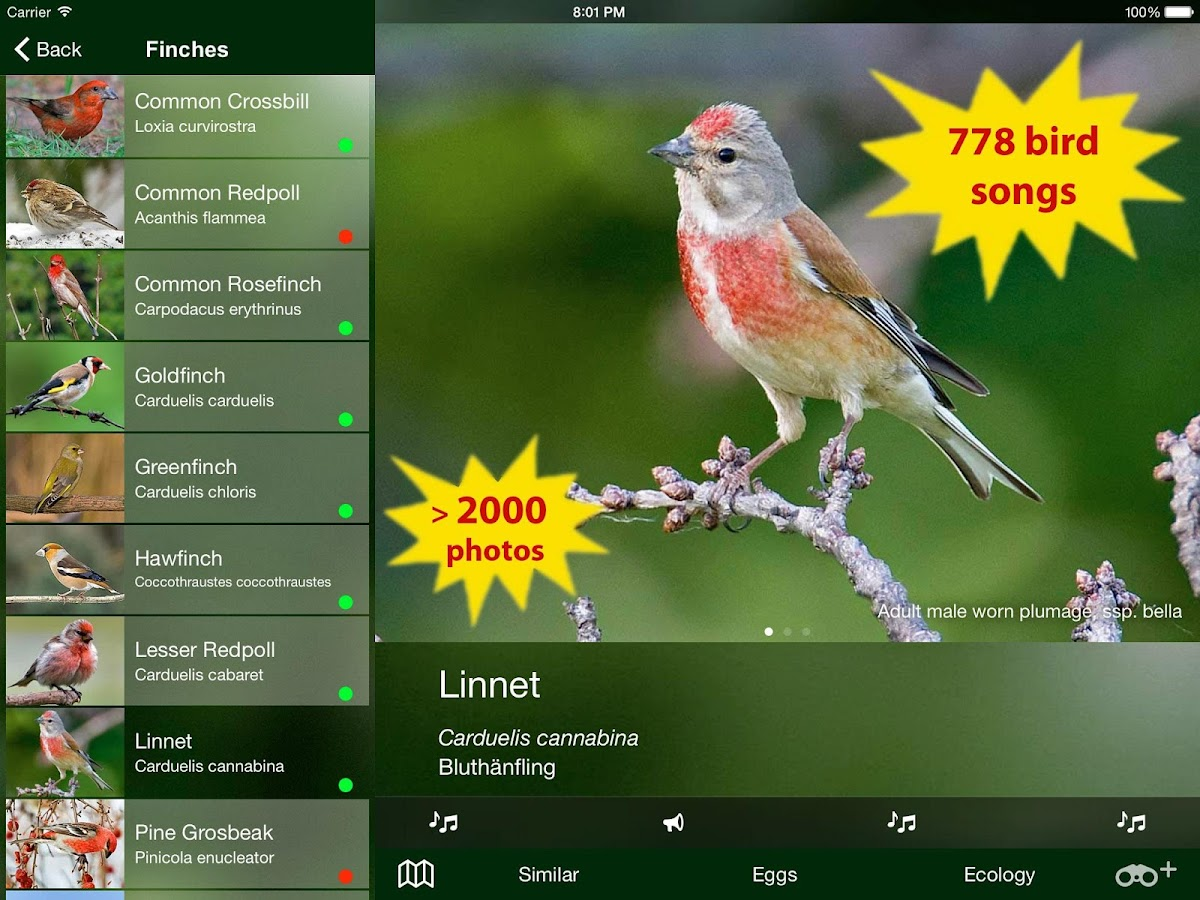 all birds switzerland android apps on google play