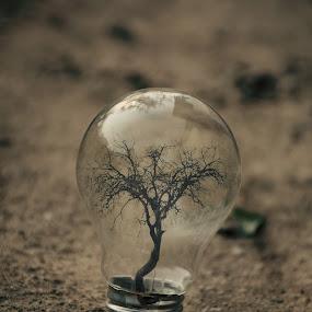 new bulb has flourished by Adrian  Limani - Digital Art Things ( flourished, tree, bulb, lamp, earth )