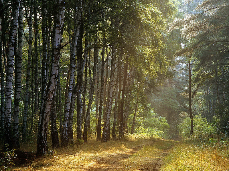 Photo: Las we wschodniej czesci  Polski (A Polish wood in the eastern part of the country)