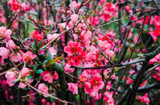 spring is coming di Manuelub