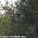 Seahawk/Osprey
