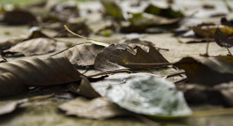 cadono le foglie... di Fabry