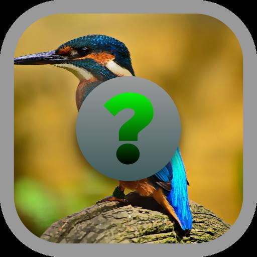 Birds Quiz (game)