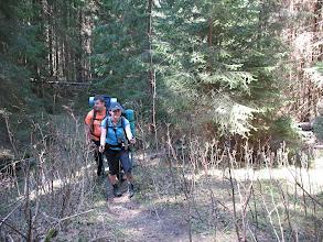 Photo: 18.Wąska ścieżynka w lesie: iglaki i krzaki drapią nas niemiłosiernie. Ale za to jesteśmy tutaj tylko my i góry-Niżne są zazwyczaj dość dzikie.