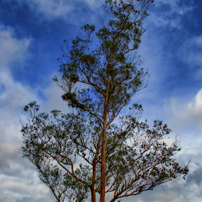 by Rusydi Ali - Nature Up Close Trees & Bushes ( Tree, Nature, Sky )