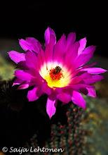 Photo: Wishing everyone a fantastic weekend :)!!  Saija Lehtonen Photography  #CactusFlower #Cactus #Floral #Macro #Nature #Photography #Southwest #Arizona