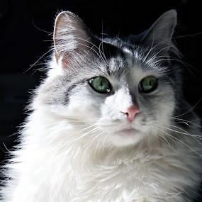 Patch by Sandy Considine - Animals - Cats Portraits