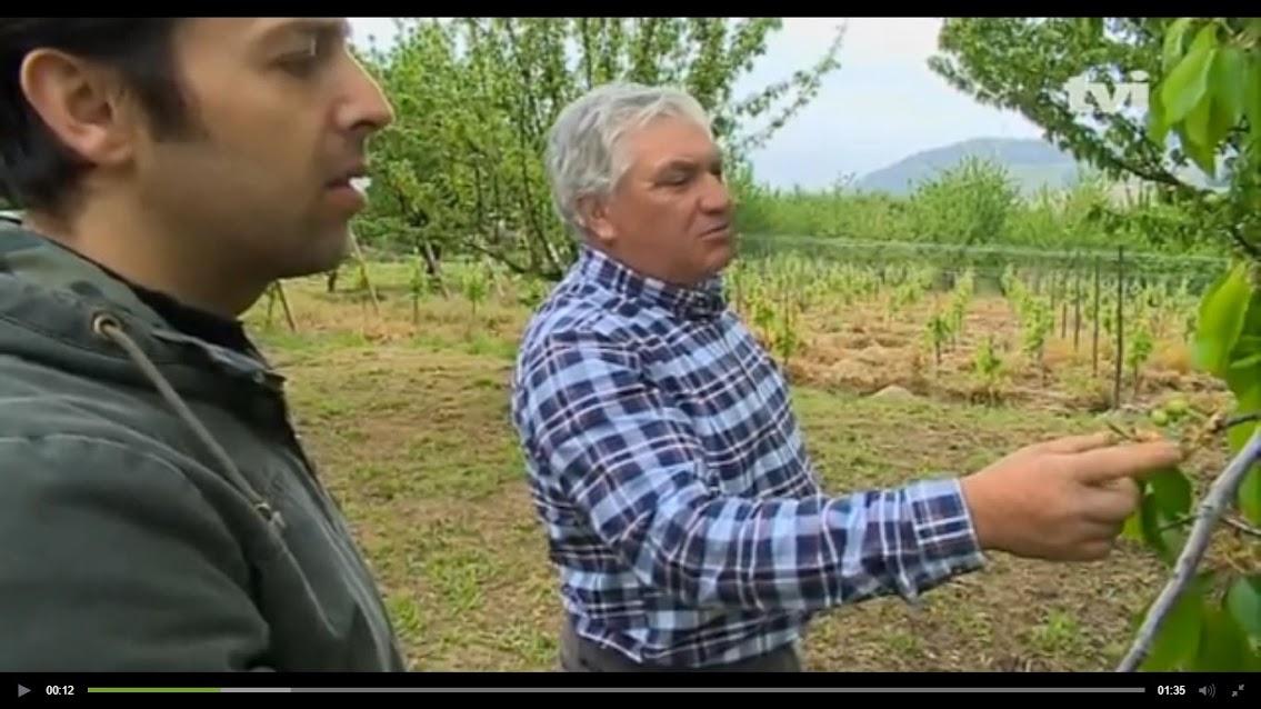 Vídeo - Produção de cereja atrasada cerca de 3 semanas
