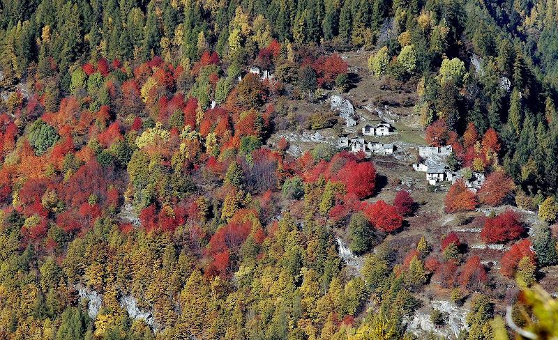 Colori autunnali in Valmalenco di benny48