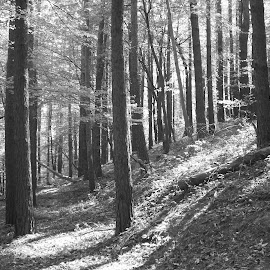 Гора by Georgi Kolev - Black & White Landscapes ( тих., ден., летен., топъл., тишина. )