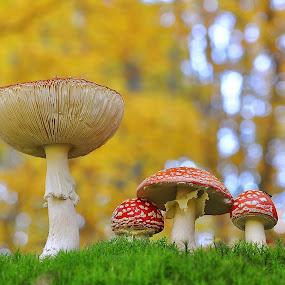 by Ivan Marjanovic - Nature Up Close Mushrooms & Fungi